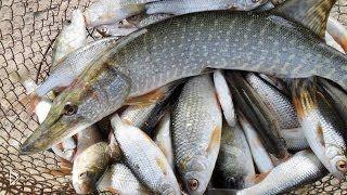 Ограничение рыбной ловли в тамбовской области